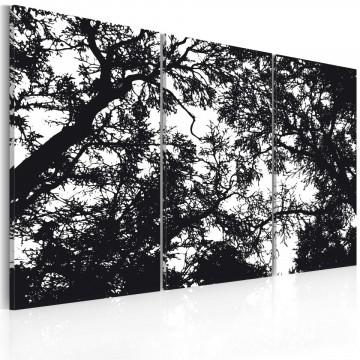 Tablou - Dense forest