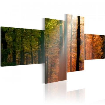 Tablou - Sunrays between trees