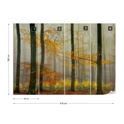 The Latest Autumn Colors Photo Wallpaper Mural