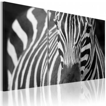 Tablou - Mrs. Zebra