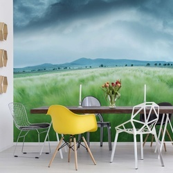 Barley Field Photo Wallpaper Mural