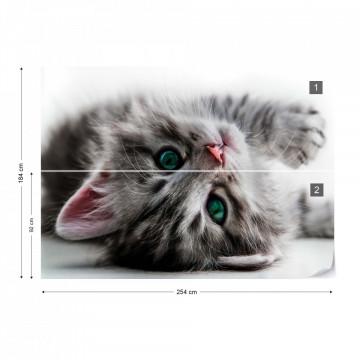 Cute Kitten Photo Wallpaper Wall Mural