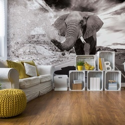 Elephant Highway Black And White Photo Wallpaper Wall Mural