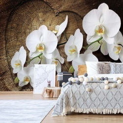 Flowers White Orchids Wood Background Photo Wallpaper Wall Mural