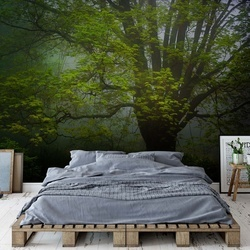 Forrest Morning Photo Wallpaper Mural