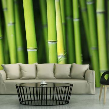 Fototapet - Bamboo