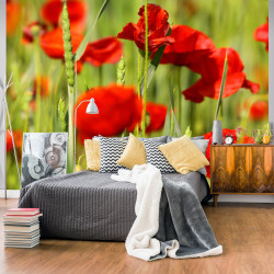 Fototapet - Cereal field with poppies