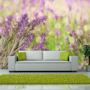 Fototapet - Lavender gardens