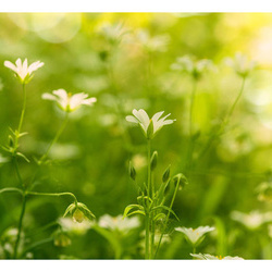 Fototapet - Nature in springtime