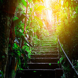 Fototapet pentru ușă - Photo wallpaper - Stairs in the urban jungle I