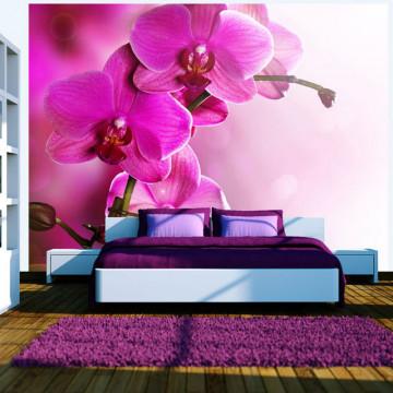 Fototapet - Pink orchid