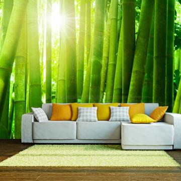 Fototapet - Sun and bamboo