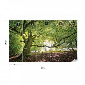 Green Tree In The Forest Photo Wallpaper Wall Mural