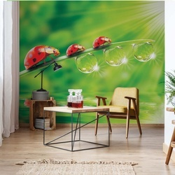 Ladybird Photo Wallpaper Wall Mural