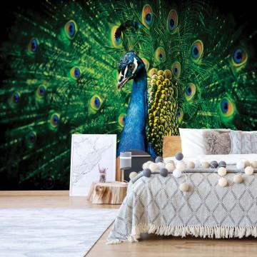 Peacock Bird Feathers Photo Wallpaper Wall Mural