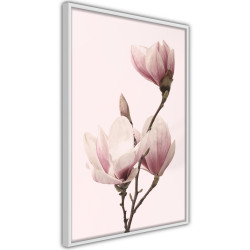 Poster - Blooming Magnolias III