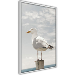 Poster - Curious Seagull