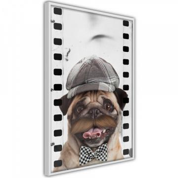 Poster - Dressed Up Pug