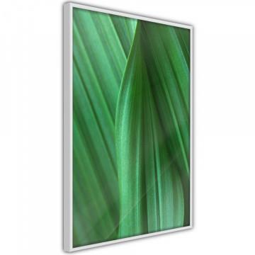 Poster - Leaf Structure