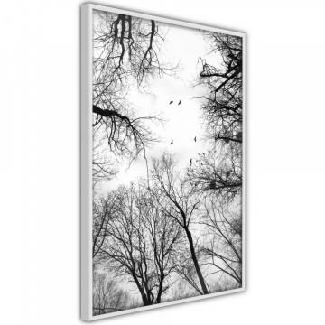Poster - Treetops