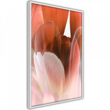 Poster - Tulip Petals