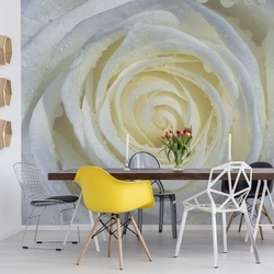 Rose Flower White Photo Wallpaper Wall Mural