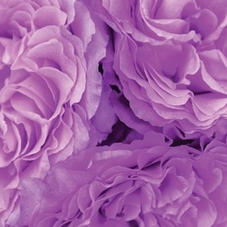 Soft Purple Flowers Photo Wallpaper Wall Mural