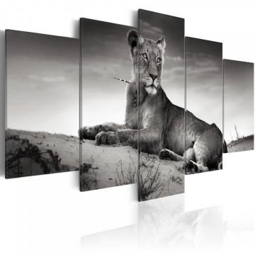 Tablou - Lioness in a desert