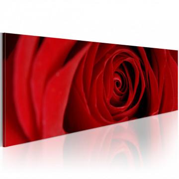 Tablou - Midnight rose
