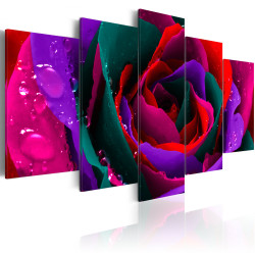 Tablou - Multicoloured rose