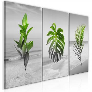 Tablou - Plants (Collection)