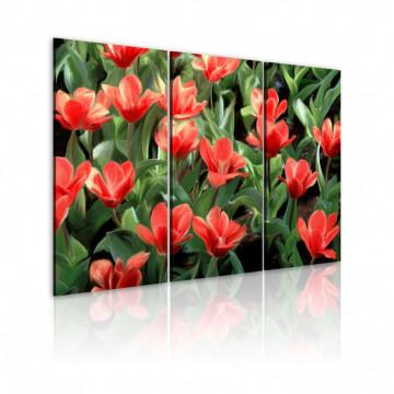 Tablou - Red tulips in bloom