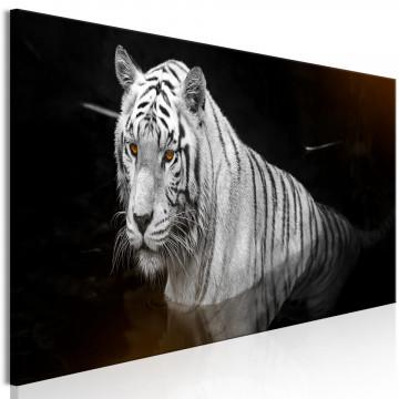 Tablou - Shining Tiger (1 Part) Orange Narrow