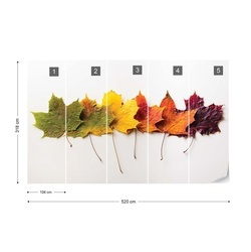 Autumn Leaves Photo Wallpaper Wall Mural