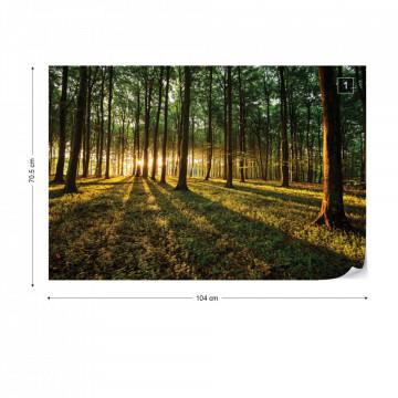Forest Landscape Photo Wallpaper Wall Mural