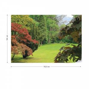 Forest Nature Photo Wallpaper Wall Mural