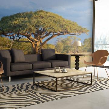 Fototapet - African acacia tree, Hwange National Park, Zimbabwe