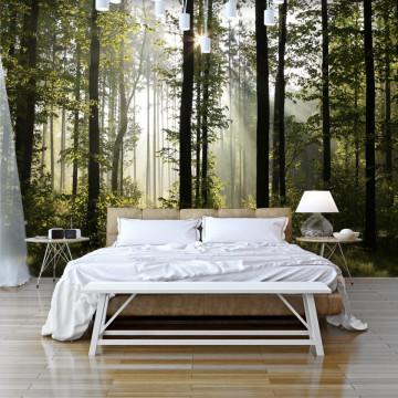 Fototapet autoadeziv - Forest: Morning Sunlight