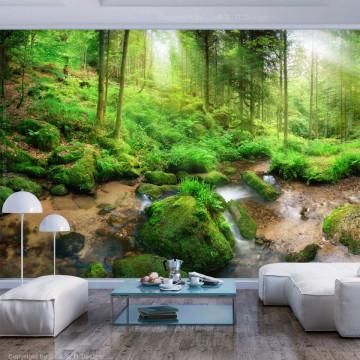 Fototapet autoadeziv - Humid Forest
