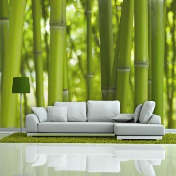 Fototapet - bamboo - green