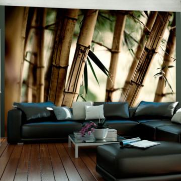 Fototapet - Fog and bamboo forest