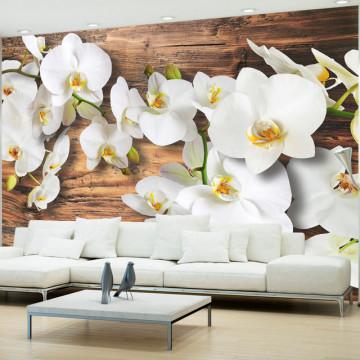 Fototapet - Forest Orchid