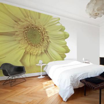 Fototapet - White gerbera daisy