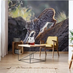 Lynx At Sunset Photo Wallpaper Mural