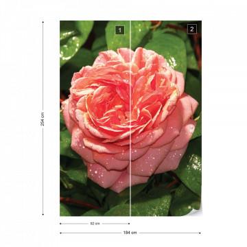 Pink Rose Photo Wallpaper Wall Mural