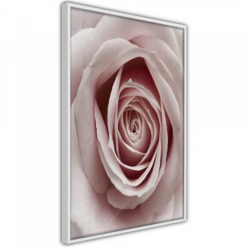 Poster - Rosebud