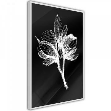 Poster - White Plant