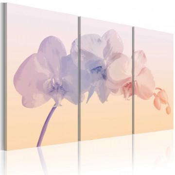 Tablou - Orchid spectrum