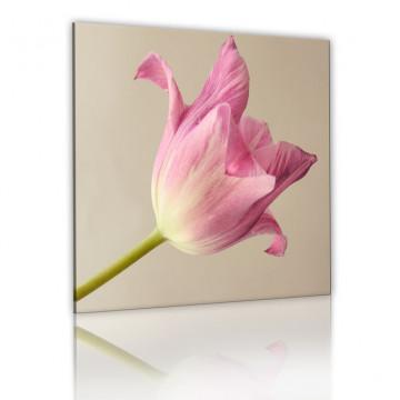 Tablou - Tulip flower