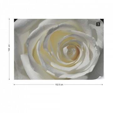 White Rose Photo Wallpaper Wall Mural